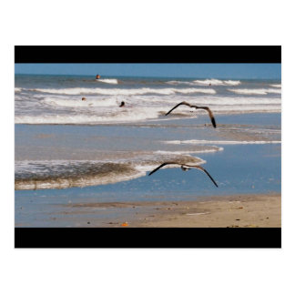 Two Seagulls Flying Postcard