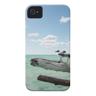 Two seagulls sitting on a dead tree sticking out iPhone 4 cover