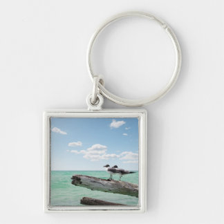 Two seagulls sitting on a dead tree sticking out keychain