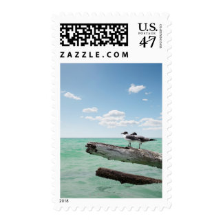 Two seagulls sitting on a dead tree sticking out postage