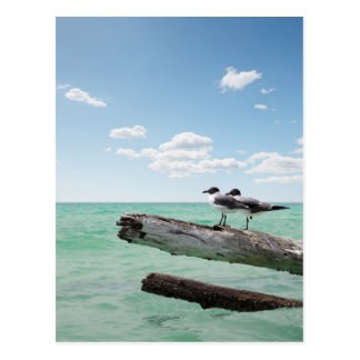 Two seagulls sitting on a dead tree sticking out postcard