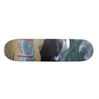 Two Seagulls Skateboard Decks