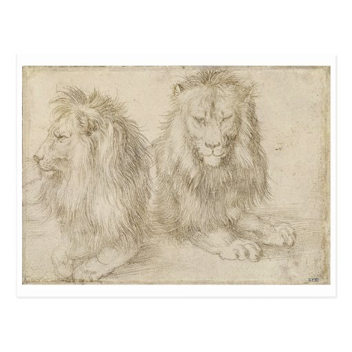 Two Seated Lions by Albrecht Durer Post Card