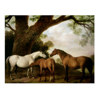 Two Shafto Mares and a Foal, 1774 Postcards
