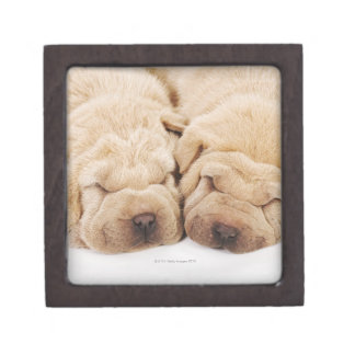 Two Shar Pei puppies sleeping Jewelry Box
