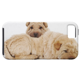 Two Shar Pei puppies sleeping, studio shot iPhone SE/5/5s Case