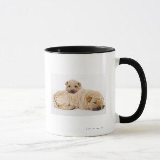 Two Shar Pei puppies sleeping, studio shot Mug