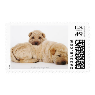 Two Shar Pei puppies sleeping, studio shot Postage Stamp