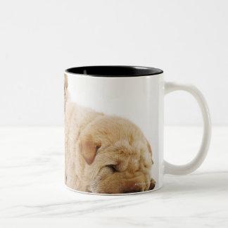 Two Shar Pei puppies sleeping, studio shot Two-Tone Coffee Mug
