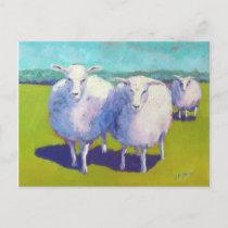 Two Sheep In Field Postcard