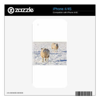 Two sheep standing in snow during winter decal for the iPhone 4