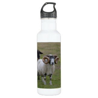 Two Sheeps are Better Than One 24oz Water Bottle
