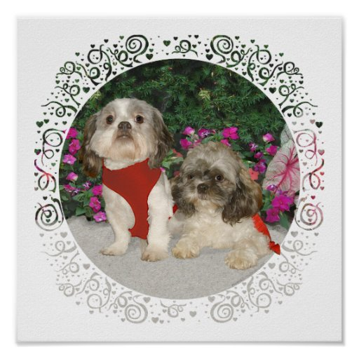 Two Shih Tzus in a Garden Poster