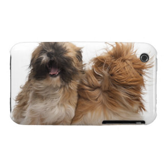 Two Shih-Tzus in the wind iPhone 3 Cases