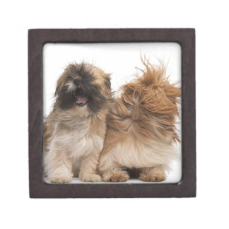 Two Shih-Tzus in the wind Premium Jewelry Boxes