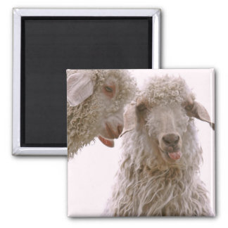 Two Silly Goats Fridge Magnet