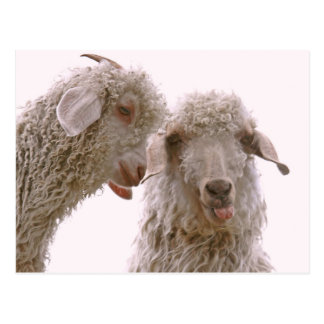 Two Silly Goats Postcard