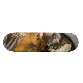 Two Sleeping Tabby Cats Cuddling Skateboards
