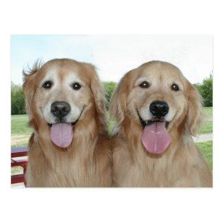Two Smiling Golden Retrievers Just Saying Hi Postcard