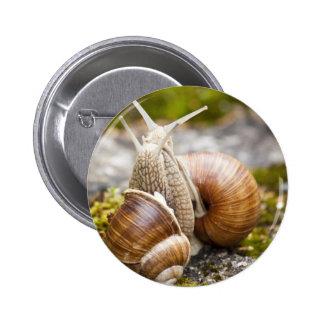 Two Snails Pinback Button