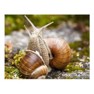 Two Snails Postcard