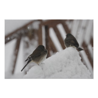 Two Snow-birds Brave the Storm Poster