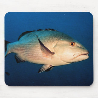 Two Spot Red Snapper Mouse Pad