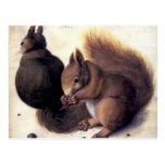 'Two Squirrels' by Albrecht Dürer Post Cards