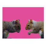 Two Squirrels Post Card