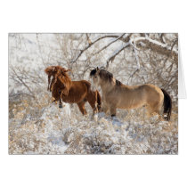 Two Stallions in Snow - Wild Horse Greeting Card