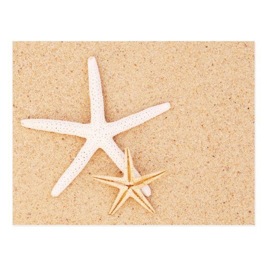 Two Starfish on a Beach Postcard