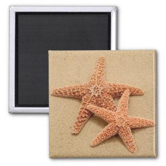 Two Sugar Starfish Magnet