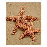 Two Sugar Starfish Posters