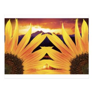 Two Sunflower Sunset Postcard