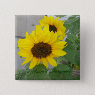 Two sunflowers button