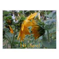 Two Sunflowers in Conversation Cards