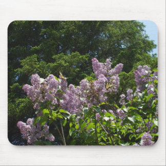 Two Swallowtail Butterflies on Lilac Bush Mouse Pad