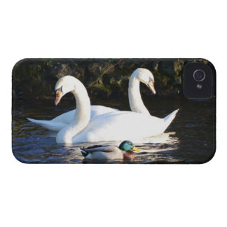 Two Swans And A Duck Case-Mate iPhone 4 Cases