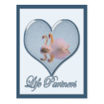 """Two Swans (with Blue """"Life Partners"""" Text) Postcard"""