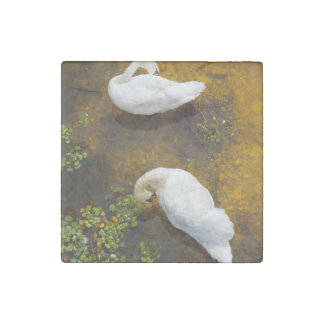 Two swans with sun reflection on shallow water. stone magnet