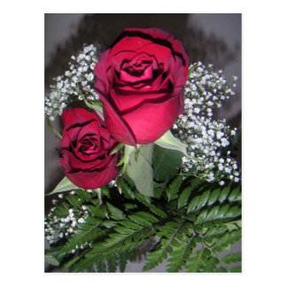 Two Sweet Pretty Red Roses With Baby Breaths Postcard