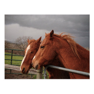 Two Tan Coloured Horses Postcard