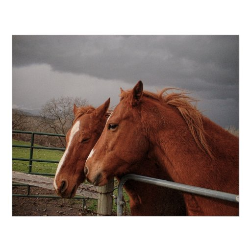 Two Tan Coloured Horses Poster