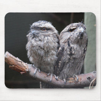 Two Tawny Frogmouth Birds Mouse Pad