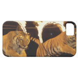 Two tigers leaping through burning rings of fire iPhone 5 cases
