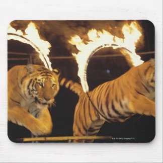 Two tigers leaping through burning rings of fire mouse pad