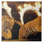 Two tigers leaping through burning rings of fire large square tile