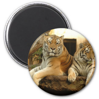 Two Tigers Magnet