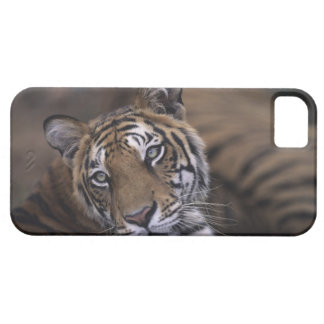 Two tigers (Panthera tigris) lying down, 2 iPhone SE/5/5s Case