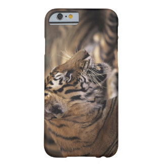 Two tigers (Panthera tigris) lying down, Barely There iPhone 6 Case